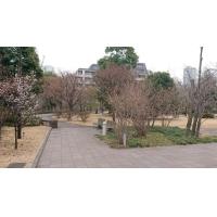 NTT東日本関東病院中庭(公園)